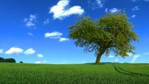 Árbol-campo verde